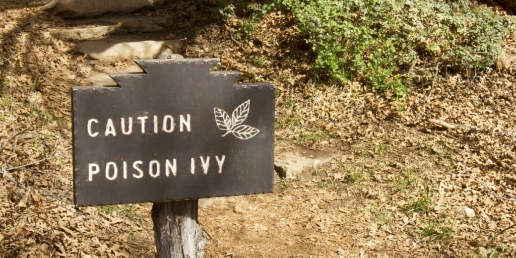Poison Ivy caution sign on forest trail